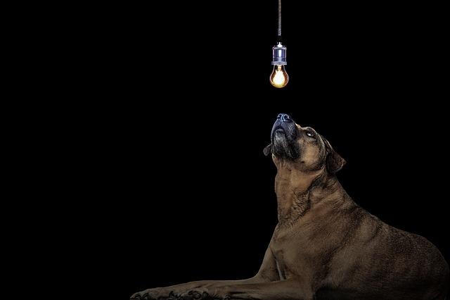 Собака и лампочка
