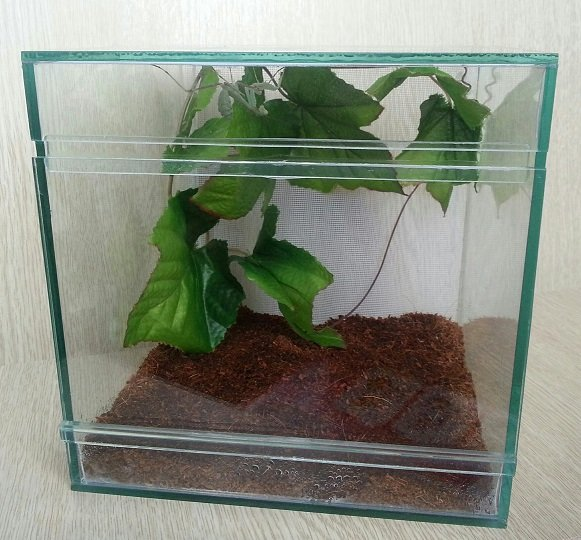 Террариум для жабы